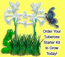 Order your tuberose starter kit today!
